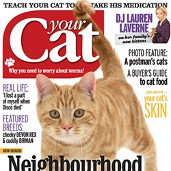 Your Cat - April 2013