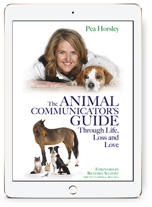 Free chapter: The Animal Communicator's Guide Through Life, Loss and Love