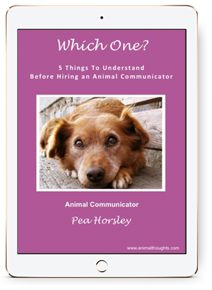 Which One? 5 Things To Understand Before Hiring An Animal Communicator
