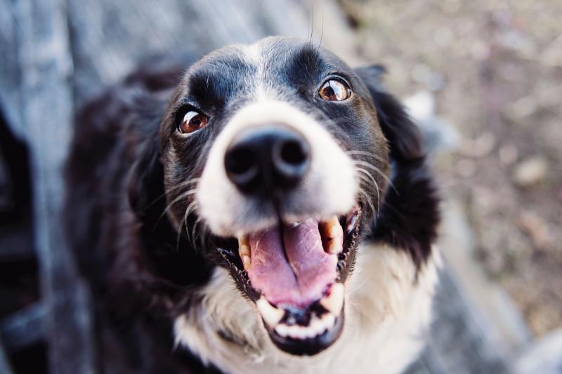 Animal Communication in a Teeny-Weeny Nutshell
