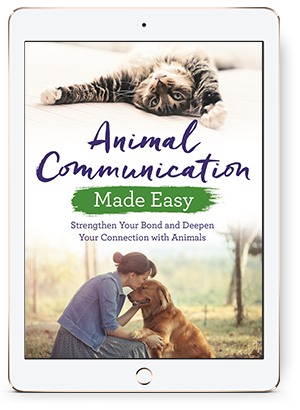 Free chapter: Animal Communication Made Easy