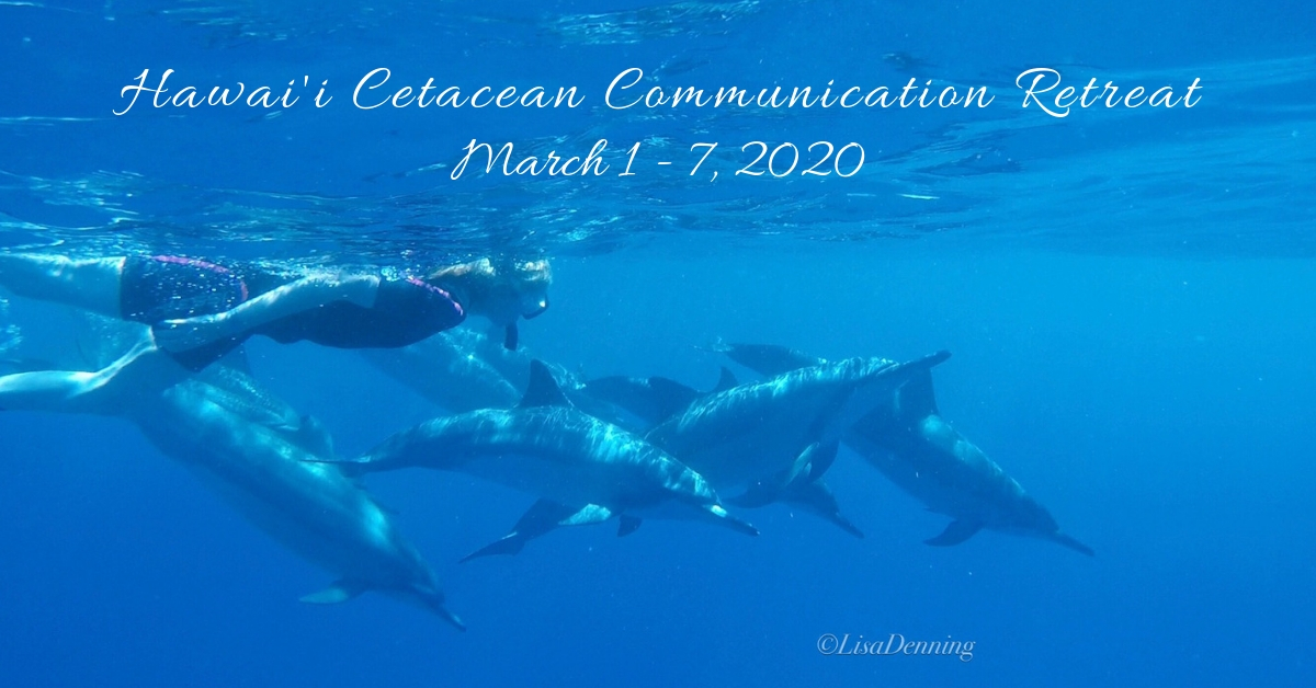 Hawaii Cetacean Communication Retreat 1 - 7 March 2020